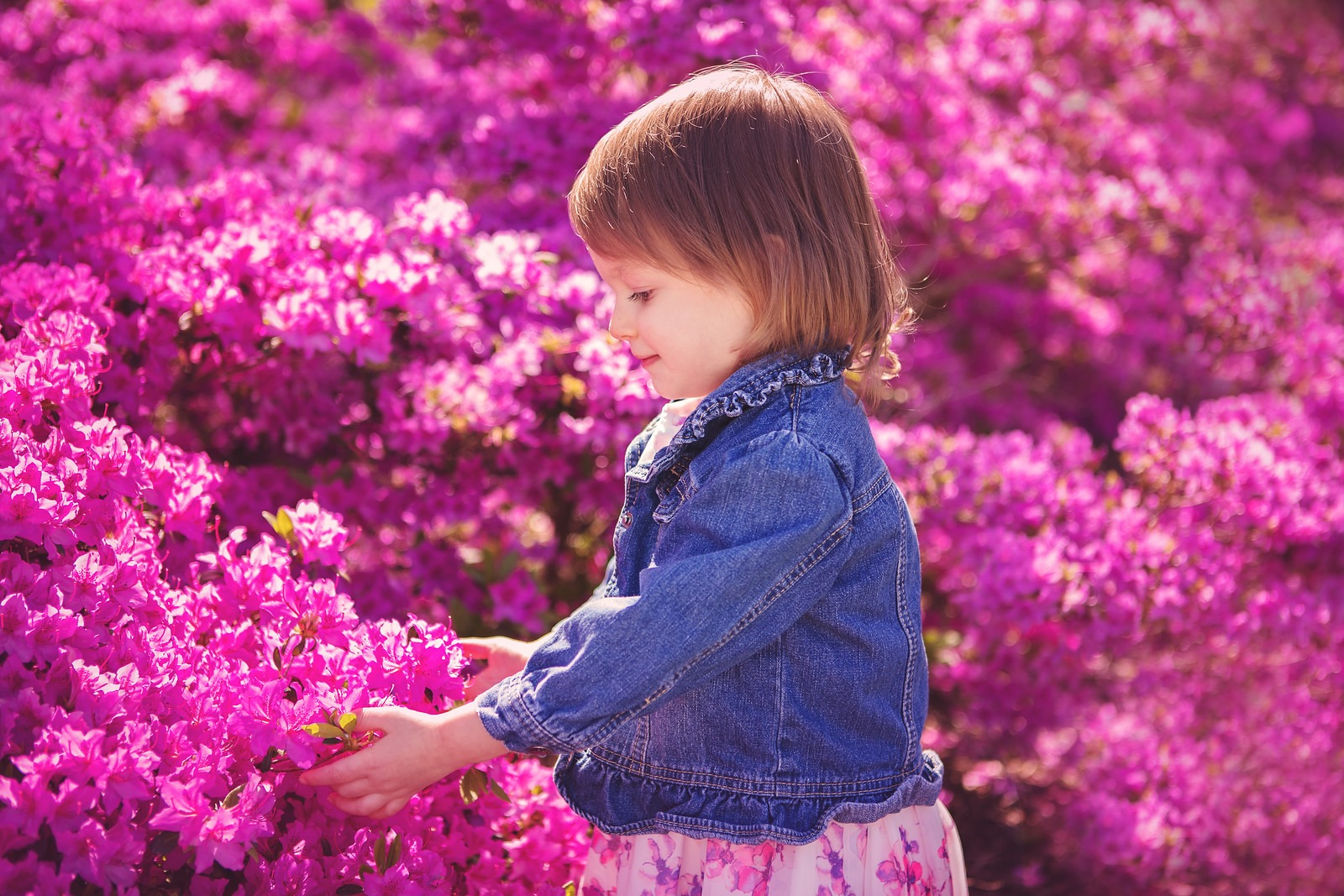 Little Girl touching Azalea Flowers in Sherwood Gardens