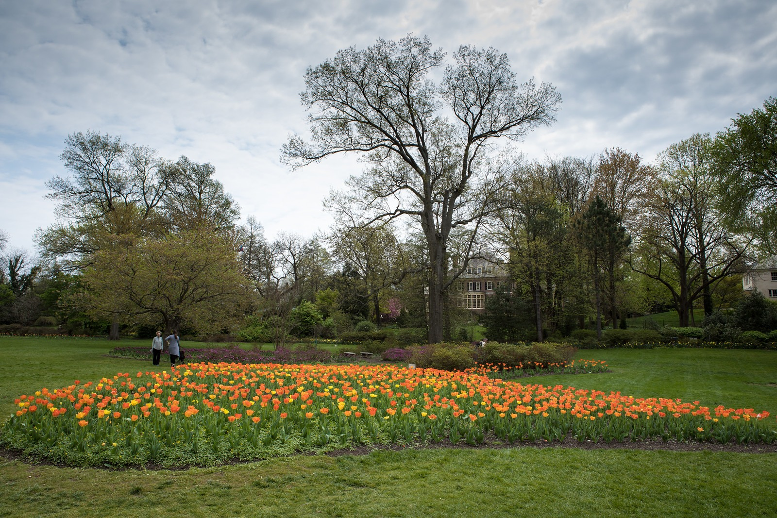 Orange Flowers in Sherwood Gardens